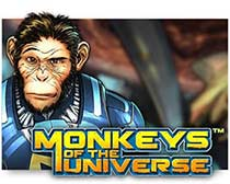 Monkey of the Universe